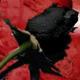 rawrcookies's avatar