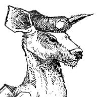 Yarrula