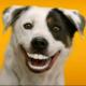 saffer06's avatar