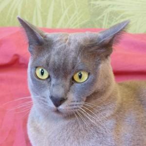 Profile picture for Maris Krivtezs