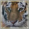 Как создать букс: мой опыт - последнее сообщение от Tiger