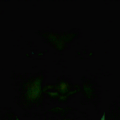 simoncherian's Avatar
