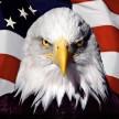 Eagle328