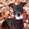 Dallas iggy - needs new home - last post by Alessia