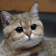 Rhaemor's avatar