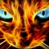 Zephyr + Cygnos V2 - last post by jaerin