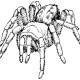 Spidersmoke
