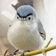 Lightfeather's avatar