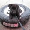 City Tire Online