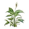 A House Plant's Photo