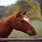 horseridingnow