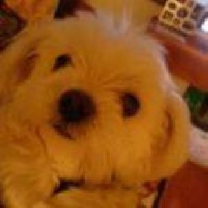 Profile picture for hiboshi