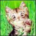 Аватар пользователя begemot1451