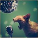 catnip's Photo