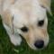 lynnduffy's avatar