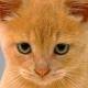 Soyrman's avatar