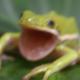 Poolie32006's avatar