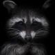 Аватар пользователя Tark