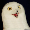"Togwotee says ""hi"" - last post by CliffTarpey"
