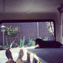 bushcat's Photo