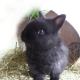 Gravatar de conejo