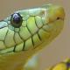 Anaconda's image