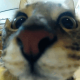 OneOptik's avatar