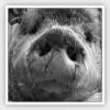 hochlander.net - ostatni post przez przemion