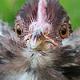 Jennifer's Backyard Flock profile image
