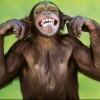 monkeyboysteve's Photo