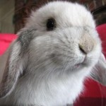 Profile picture of rabbit