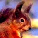 squirrelsquirrel's Photo