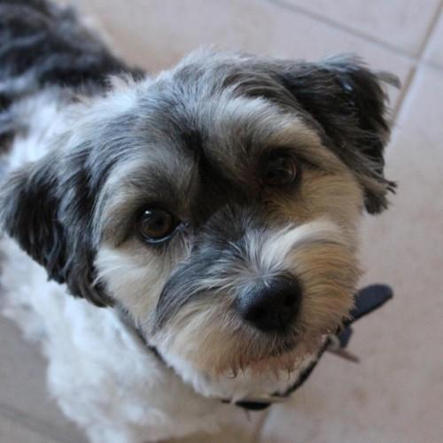 RobinsSea profile picture