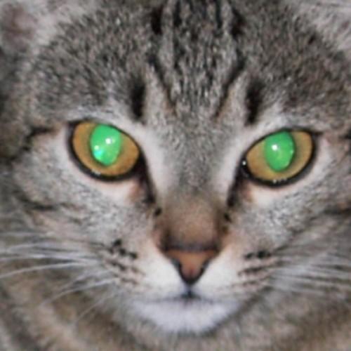 oneshots3dmodels profile picture