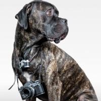 KOKO HUNT PHOTOGRAPHY