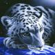 Stevia's avatar