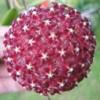 velvetine's Photo