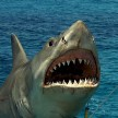 Jaws22