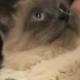 SavvyZ's avatar