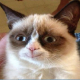 JamesBean9's avatar