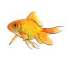 Sketchbook - Bluishbird - last post by bluishbird