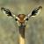 profile avatar from Gravatar