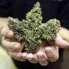 Please list legit marijuana seed banks that freight to australia - last post by caanabis420