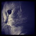 fotogrrl69's Photo