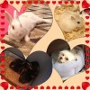 Pets @ Home Hamster care. - last post by TinyHamsters123