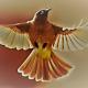 christna steyn's avatar