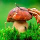 Maggsle's avatar