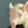 Kotorikokoro avatar