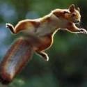 SquirrelWatchin's Photo