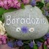 Baradozic